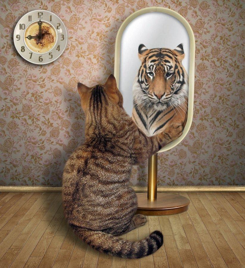 Feng Shui mirror cat