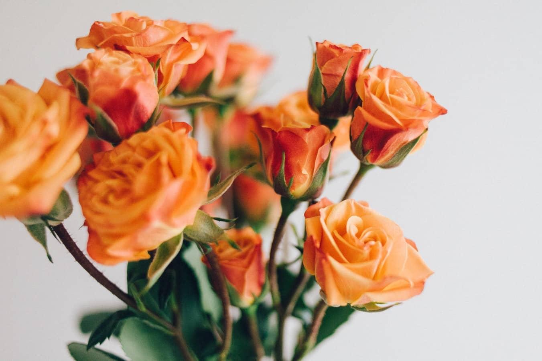 Orange Flower to warm a room