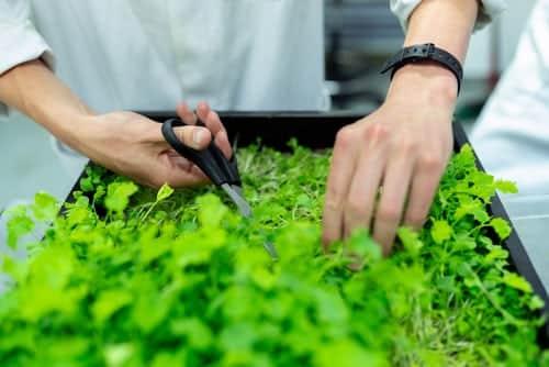 Herbs as remedy