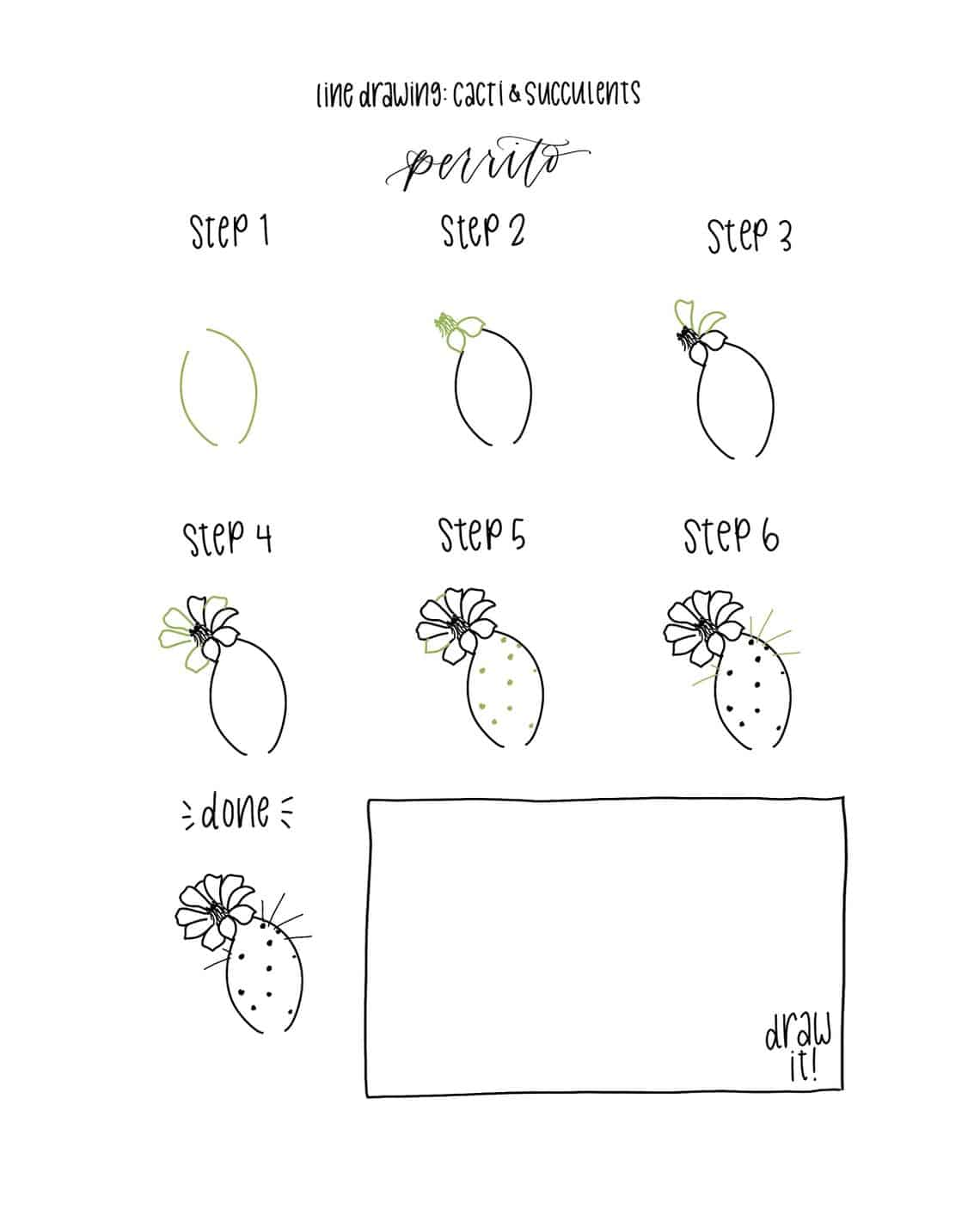 Step by step botanical drawing